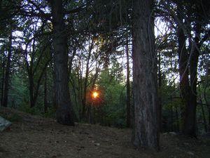 Pikes Peak Arboretum, Lake Arrowhead, CA - Ghost Writers, elance